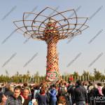 EGS2015_32328 | L'albero della Vita