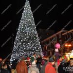 EGS2015_37245 | Albero di Corso Repubblica