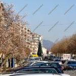 EGS2016_40259   Alberi in fiore a dicembre in corso Repubblica