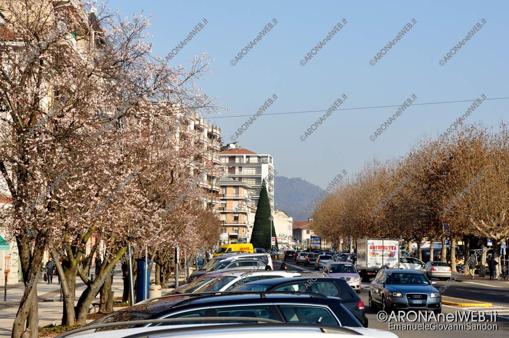 EGS2016_40259 | Alberi in fiore a dicembre in corso Repubblica