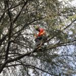 EGS2017_29898 | Dimostrazione di Tree Climbing - Idea Verde di Matteo Bizzotto
