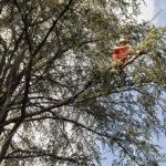 EGS2017_29903 | Dimostrazione di Tree Climbing - Idea Verde di Matteo Bizzotto