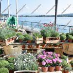 EGS2018_32166 | Trifolia 2018 – Mostra mercato florovivaistica