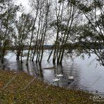 EGS2018_38162 | Lago Maggiore, raggiunta la piena ordinaria - Arona, Corso Europa
