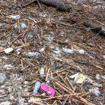 EGS2018_38211 | 02.11.2018 - Beach litter, Arona - Piazza del Popolo