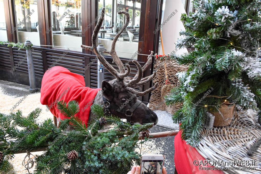 EGS2019_42406 | La renna di Babbo Natale